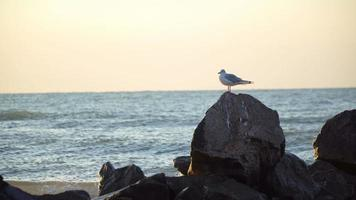 Gaviota solitaria se sienta sobre una roca en el mar en el horizonte temprano en la mañana