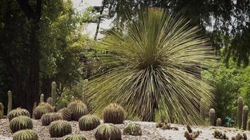 palmeiras do deserto e cactos no jardim botânico