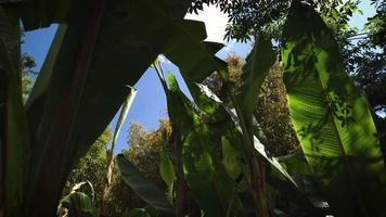 Detalle de plataneros en jardín botánico