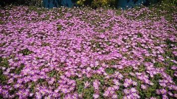 florzinhas rosa no jardim botânico video