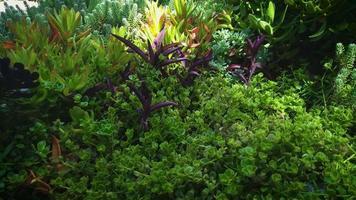 close up de plantas suculentas no jardim botânico video