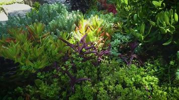 Detalle de plantas suculentas en jardín botánico