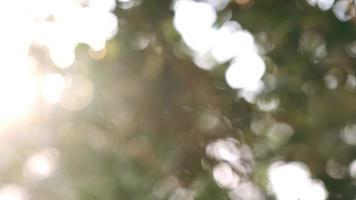 Sonnenstrahlen scheinen durch üppig grüne Blätter.