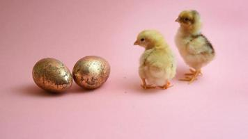 2 easter chicks with 2 golden easter eggs
