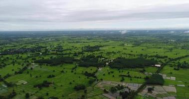 Luftbild landwirtschaftlicher grüner Reisbauernhof von Thailand.