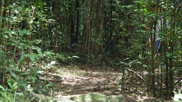 niño corriendo y jugando en el bosque