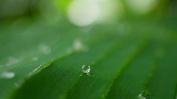 waterdruppels op tropisch groen blad