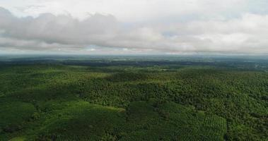Vue aérienne de la forêt tropicale verte de la Thaïlande