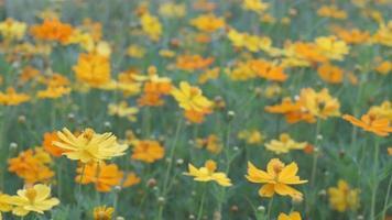 Flowers at sunrise  video