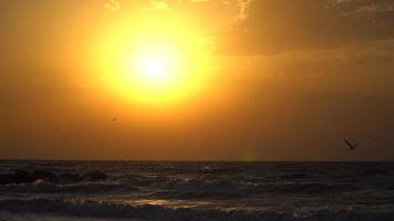 gaivota voa para o céu em direção ao sol. câmera lenta do pôr do sol