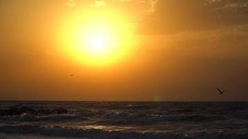 måsen flyger in mot himlen mot solen. solnedgång slow motion video