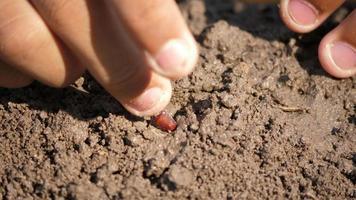 mano plantando una semilla en el suelo