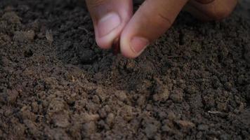 planter à la main une graine dans le sol,