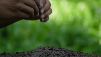Mano sujetando árboles de plantas jóvenes en suelo fértil en el jardín