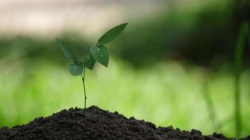Planta joven árbol en suelo fértil en el jardín