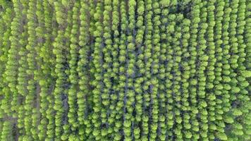 Aerial view of rainforest in Thailand.