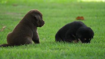 lindo perrito jugando en el parque