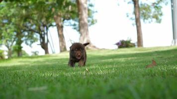 cachorro jugando en el parque