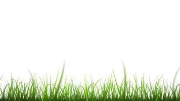 hojas de hierba en bucle de fondo de cielo hermoso video