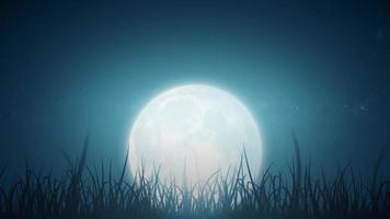 foglie di erba sul bellissimo ciclo del cielo notturno