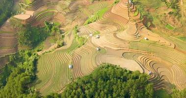 Clip aéreo de terrazas de arroz en Vietnam