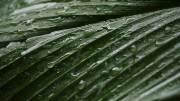 chuva caindo em uma folha verde video