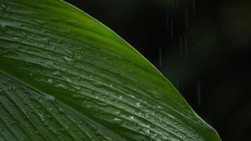 lluvia cayendo sobre una hoja verde video