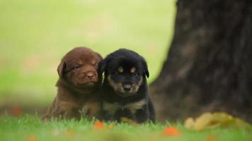 filhote de cachorro fofo brincando no parque verde