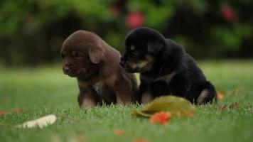 Lindo perrito bebé jugando en el parque verde