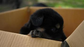 perrito se sienta en una caja de cartón