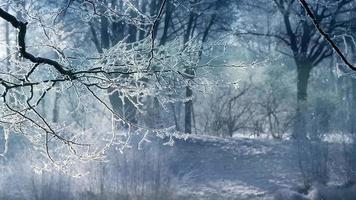 sfondo di animazione paesaggio invernale
