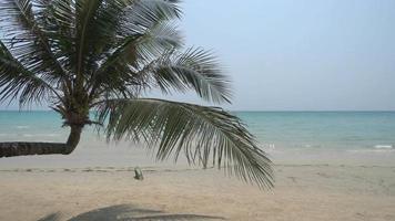 un albero di cocco e il mare