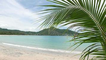albero di cocco in spiaggia