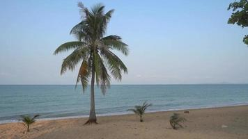 A Coconut Tree And The Sea video