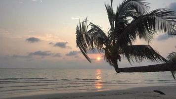 Palme zur Sonnenuntergangszeit