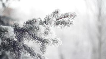 bosque de abetos de invierno con árboles de navidad nevados