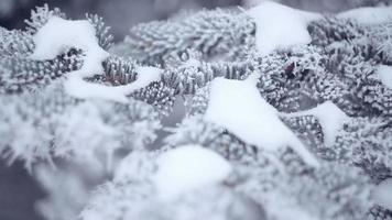 forêt de sapins d'hiver avec des arbres de Noël enneigés