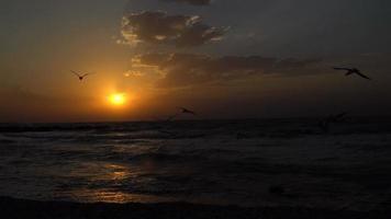 puesta de sol sobre el mar y gaviotas volando por el cielo