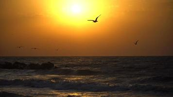 pôr do sol sobre o mar e gaivotas voando pelo céu