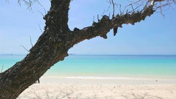 plage tropicale avec une branche