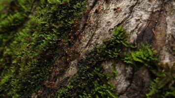 hormigas marchando sobre arboles