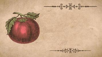 modelo de receita de tomate