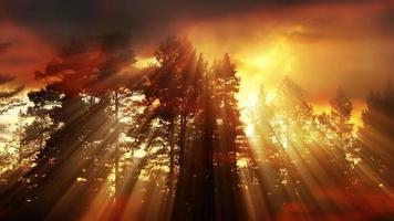 fundo claro da floresta à noite