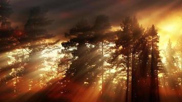 fondo de bosque de luz de la tarde