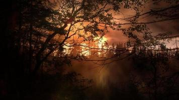 fondo de bosque de luz de la tarde video