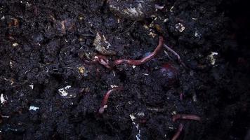 Earthworm Farm video