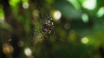 Close up di ragno con bokeh verde in background