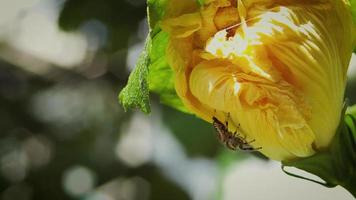 bunte Spinne und gelbe Blume