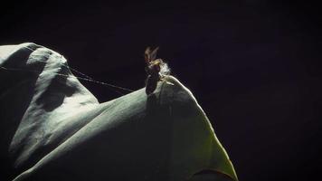 Spinnen- und Seidenfäden video