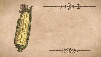 plantilla de receta de mazorca de maíz
